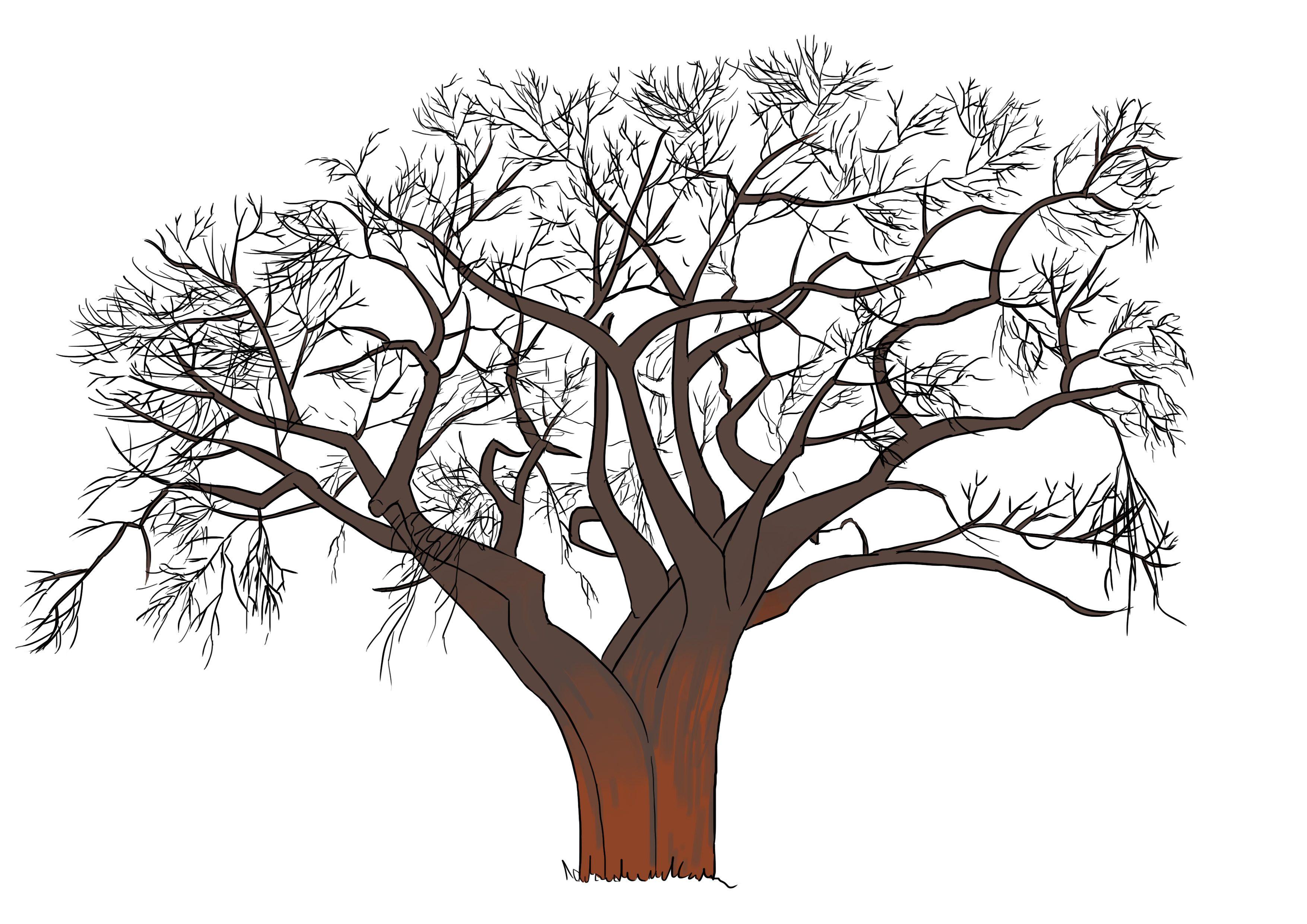 Dessin Branche D Arbre