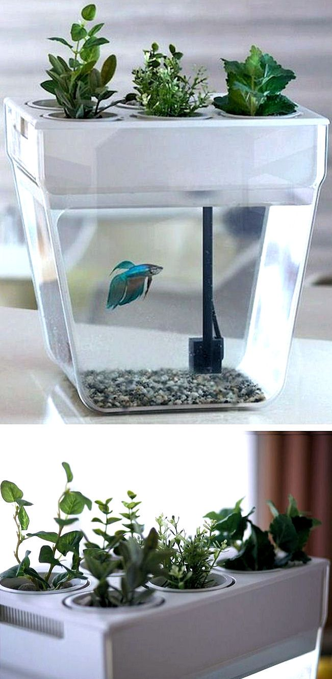 self cleaning & feeding fish tank | college | pinterest | fish