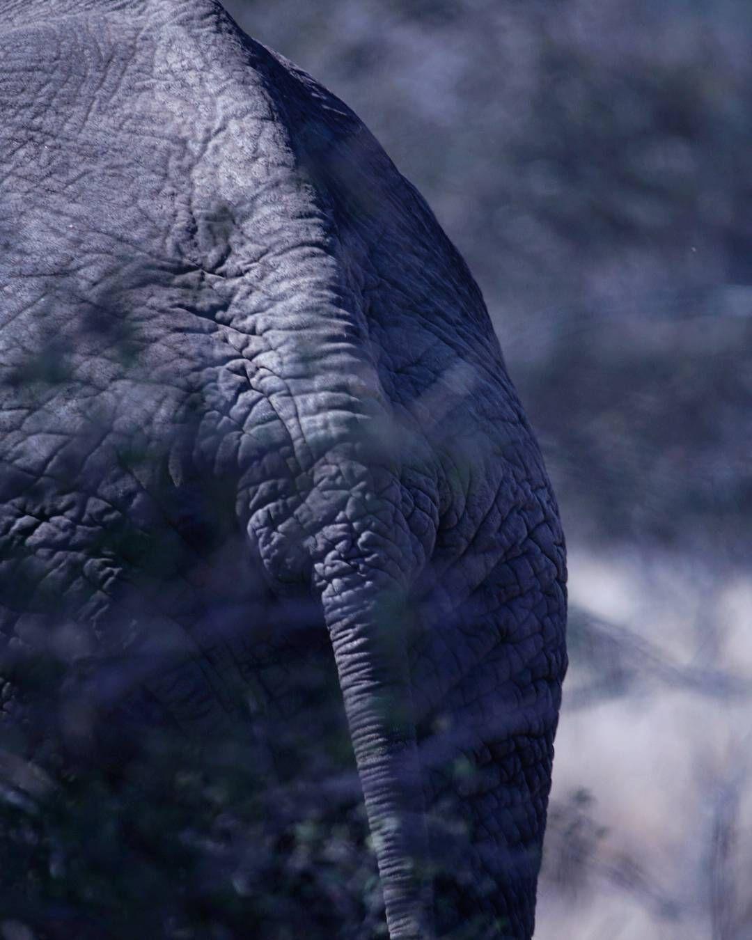The Tail Elephant Elephanta Africanelephant Wildlifeafrica Saveelephants Wildlifephotography