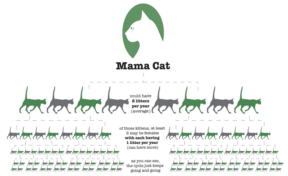 Infographic On Cat Litters Reproduction Google Search Kitten Season Mama Cat Infographic