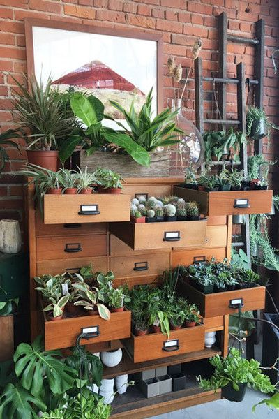 Glasswing's Succulent Drawers Decorating Ideas Room