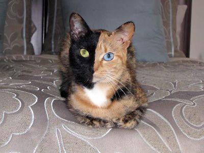 Noir lesibans manger chatte