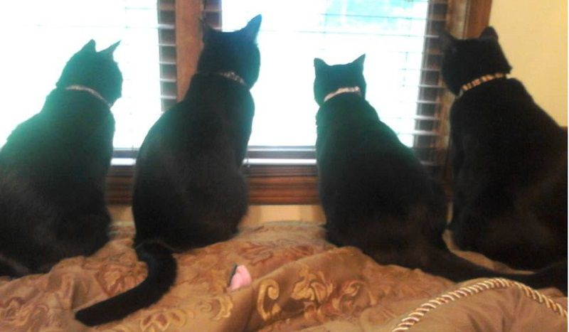 Black Cat Love, Adoption Story Clink photo to read article #blackcatsrule