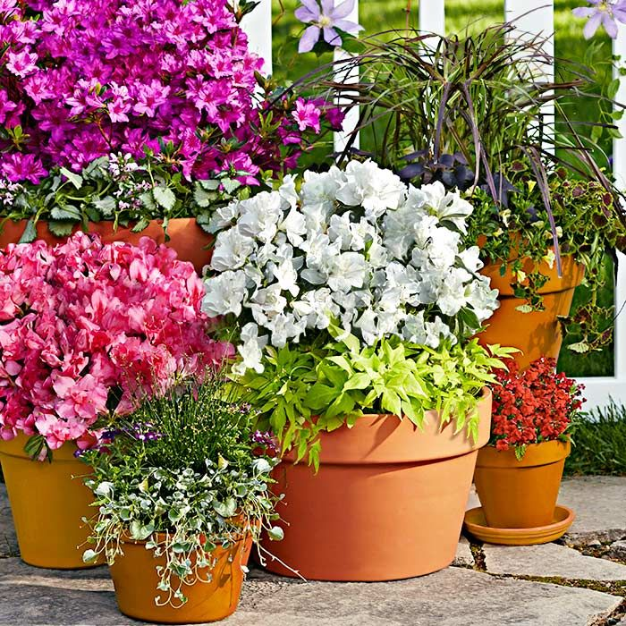 Flower Garden For Dummies: Container Garden With Potted Azaleas. For More DIY Ideas