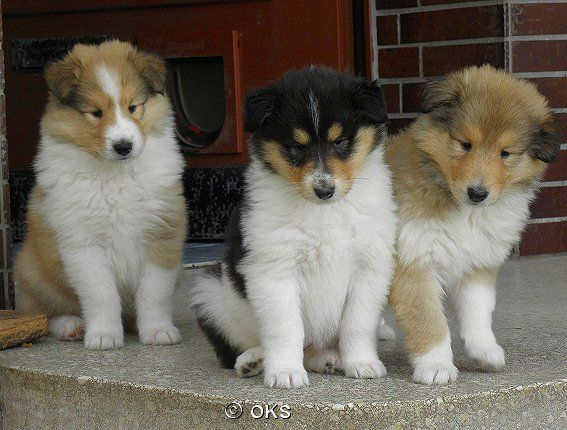 Wir Haben Keine Welpen Abzugeben I Think It Says Something About Puppies But Who Couldnt Love Those Faces Dog Cat Mans Best Friend Dogs
