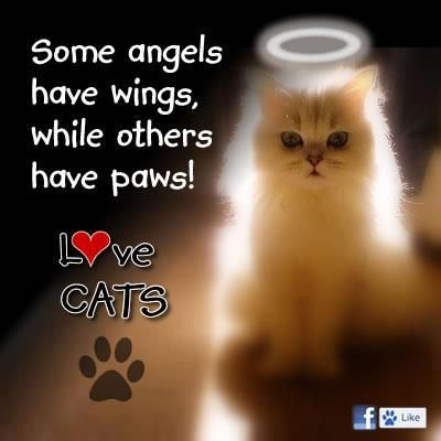 Some Angels Have Wings While Others Have Paws Cat Quotes Angel Cat Cats Meow