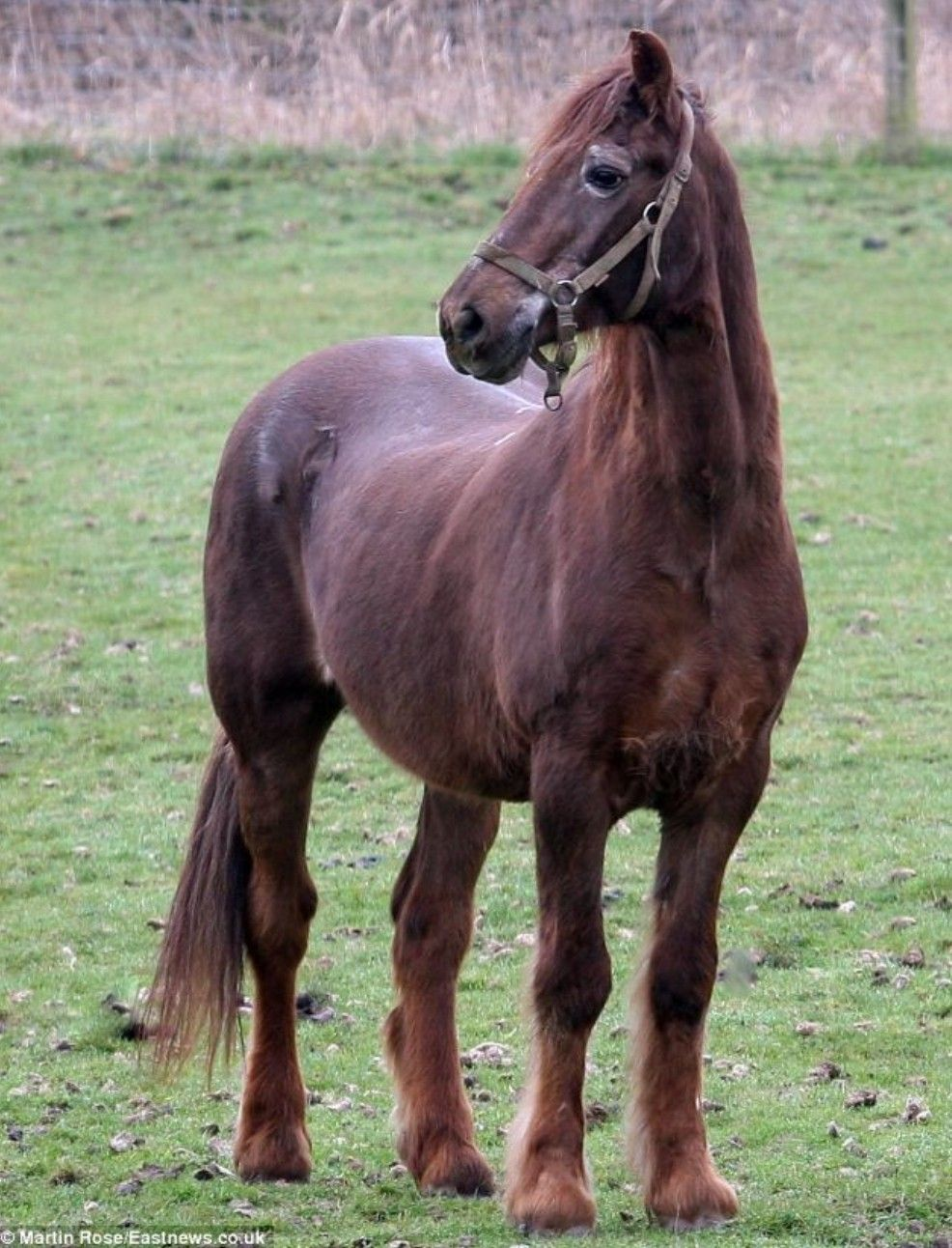 Oldest Horse In The World Shayne 51 Just Died With Images