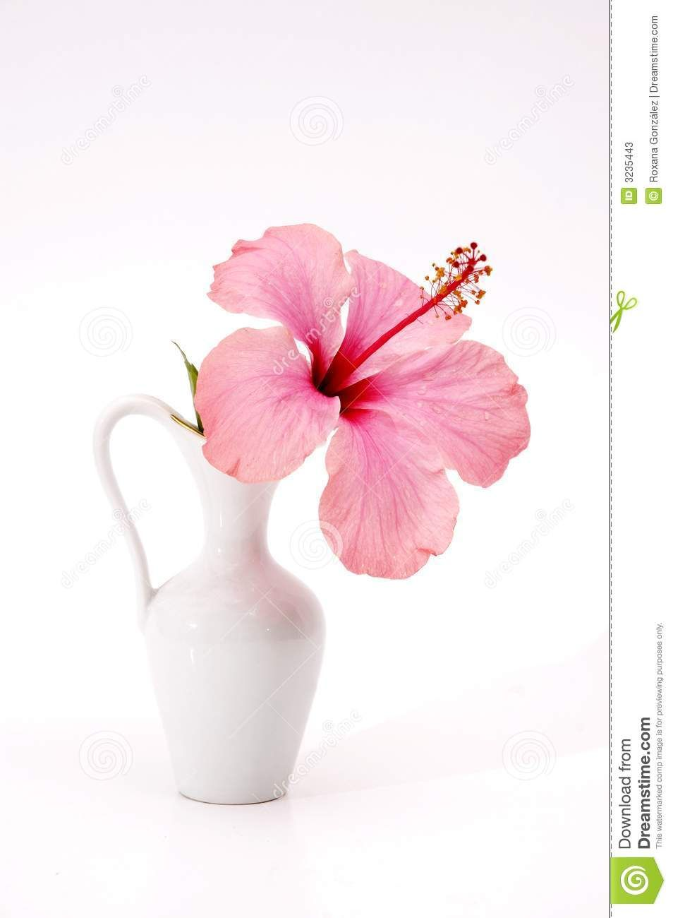Vase flowers flowers pinterest image macro leaf images and vase flowers izmirmasajfo Gallery