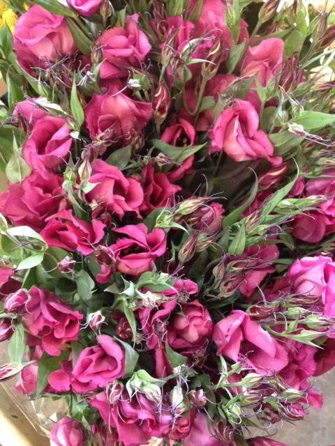 Lisianthus 'Adom' deep cerise/purple. Sold in bunches of 10 stems from the Flowermonger the wholesale floral home delivery service.