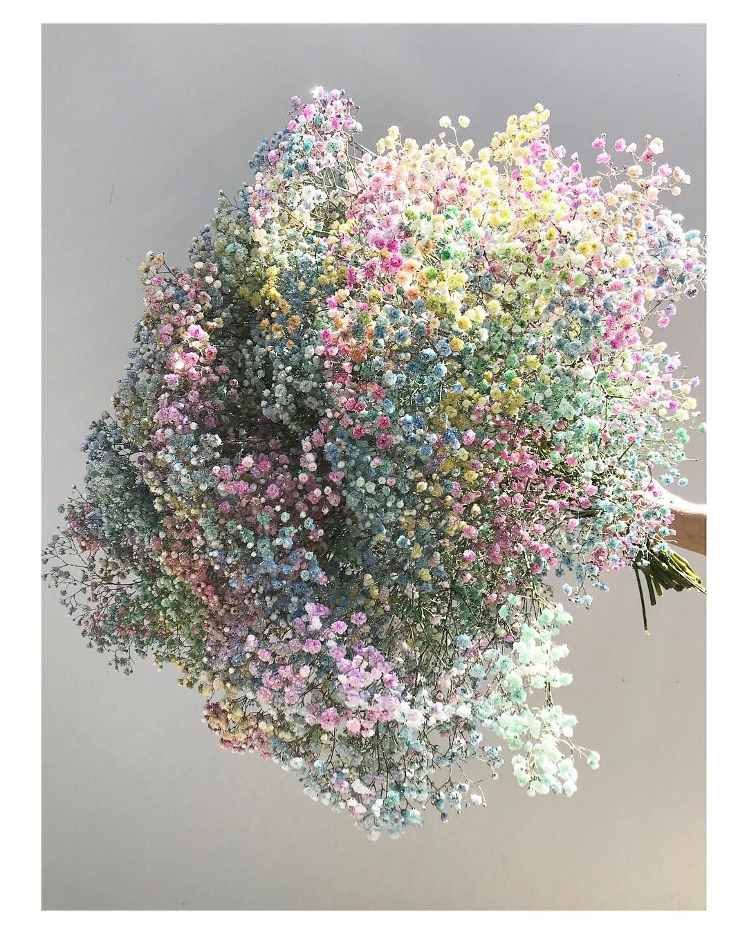 Hamblins On Instagram Rainbow Sparkles This Baby S Breath Is Breathtakingly Sparkly And Beautiful In Real Life Super Pre Dried Flowers Babys Breath Bouquet