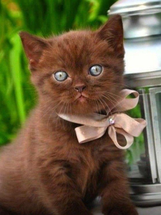 Картинки привет с котятами, поздравления