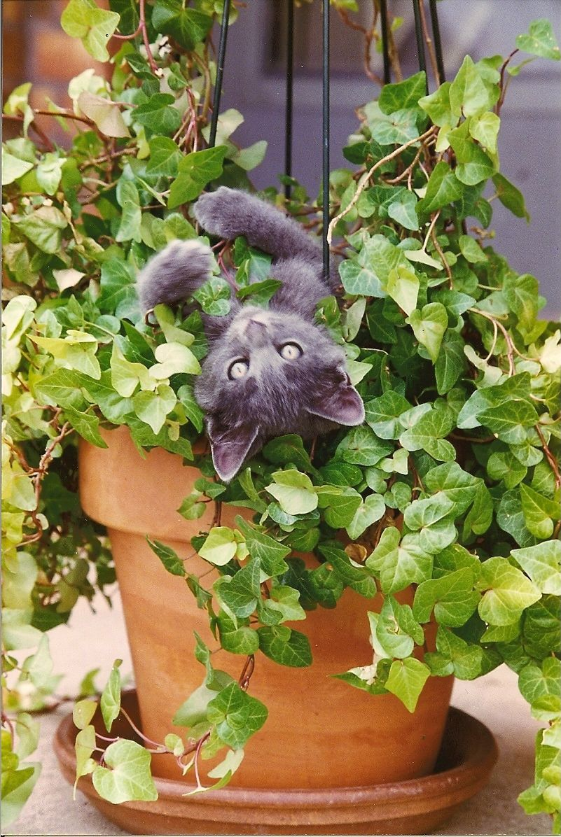 Katze Im Blumentopf Avec Images Cute Kittens Chat Fou Chats Et Chatons