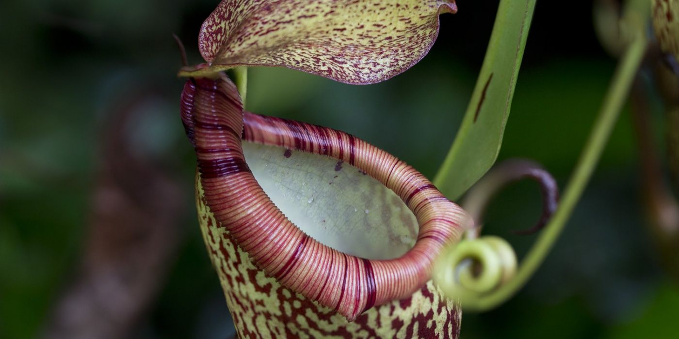 Lesson plan teaching resource: Rainforest Adaptations, for ...