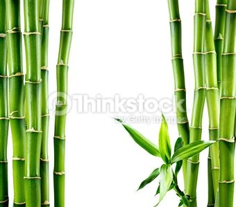 Search for Stock Photos of Bamboo - Plant on Thinkstock