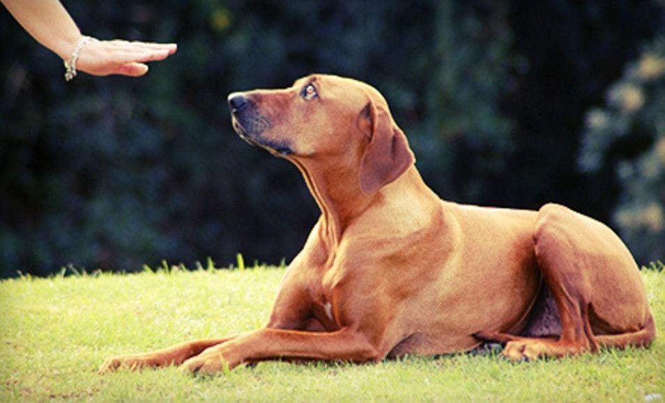 Hanna S Naughty Dog Training Training Your Dog Dog Training