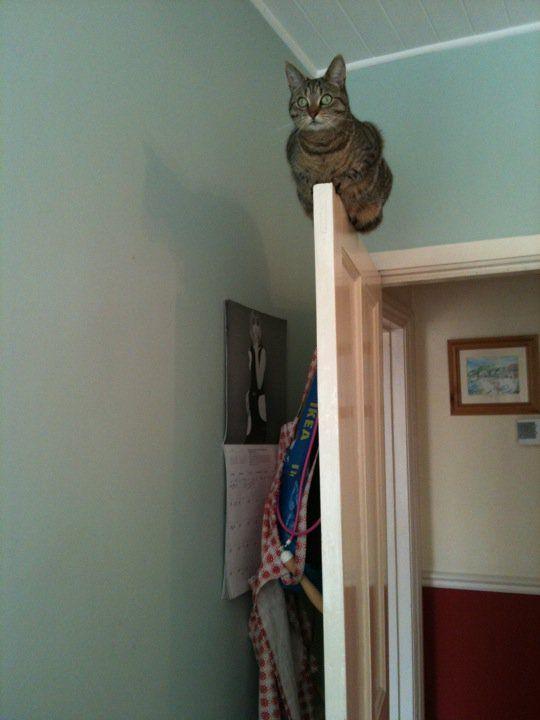 ♥ Esse gato gosta das coisas difíceis...