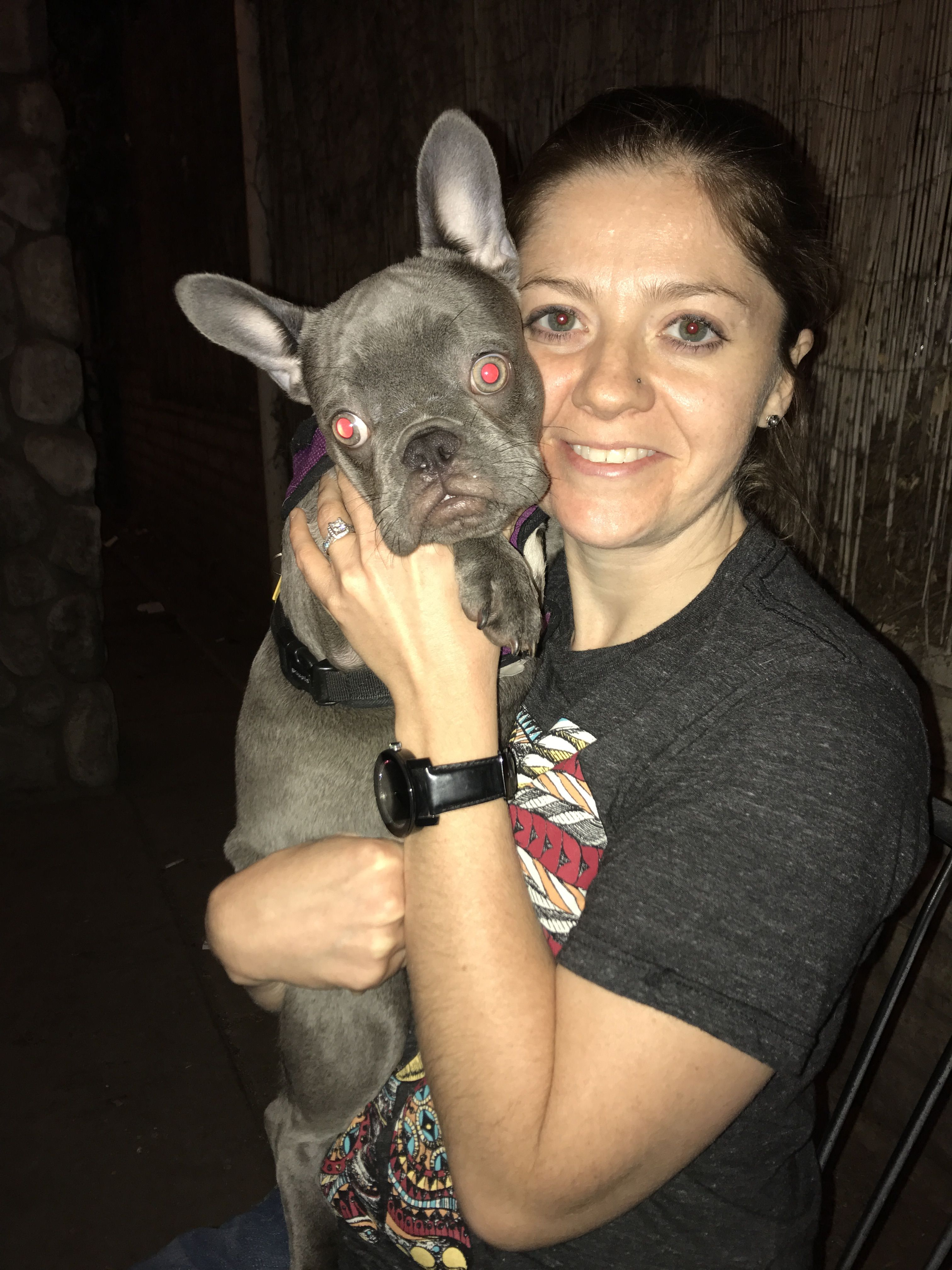 Pin by Frenchie Pride on Lilac French Bulldog Puppy