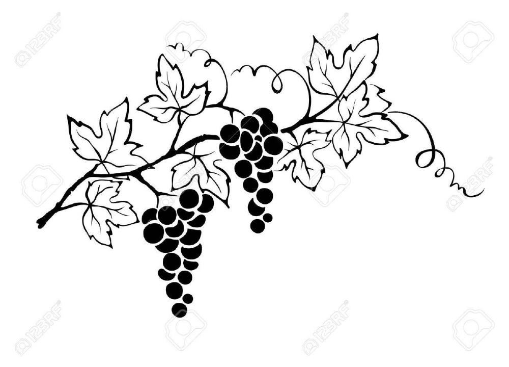 Vector Illustration Grapevine Wine Glass Tattoo Grape Vines Illustration
