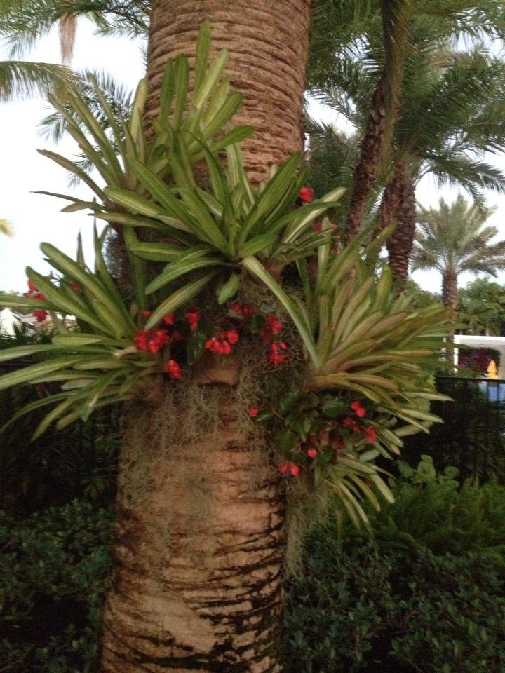 Bromelia placement plantes pinterest decoraciones for Plante bromelia