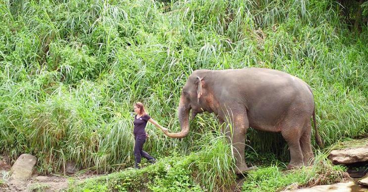 Elephants Treks And Temples Wild Women Expeditions Thailand Elephants Elephant