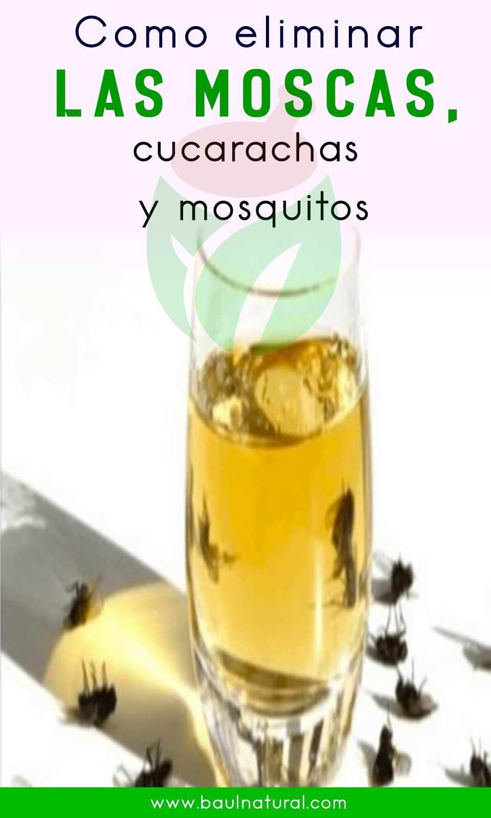 Como Eliminar Las Moscas Cucarachas Y Mosquitos Easy Christmas Treats Recipes Christmas Food Treats Easy Christmas Treats