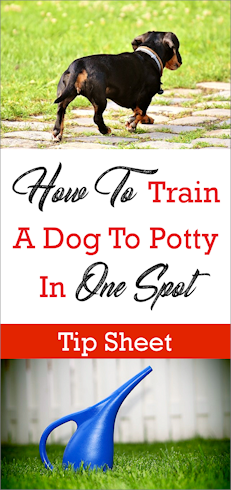 How To Train A Dog To Potty In One Spot Yes It S Possible In 2020 Potty Training Puppy Dog Potty Training Dog Pee
