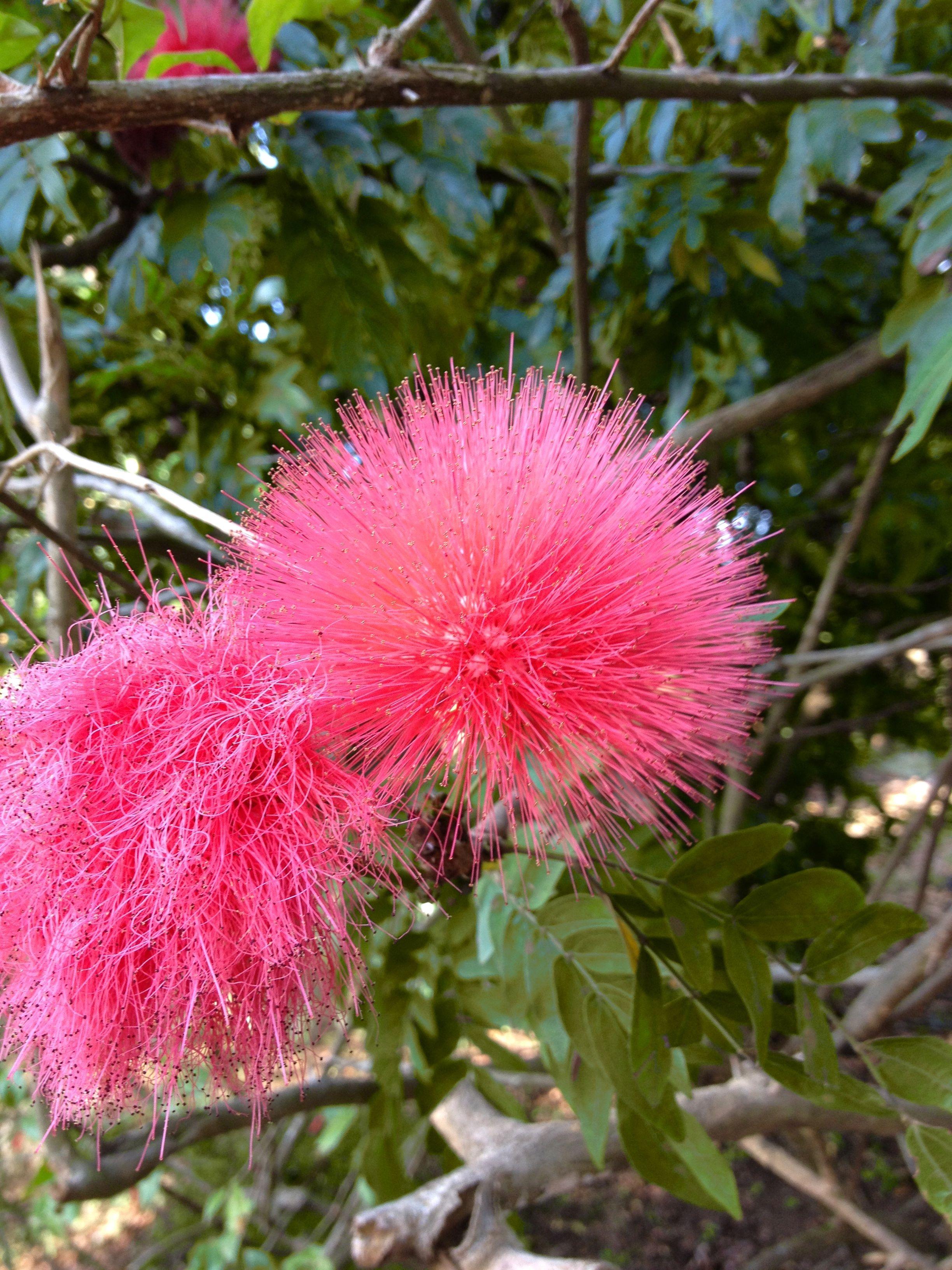 Flor explosiva!