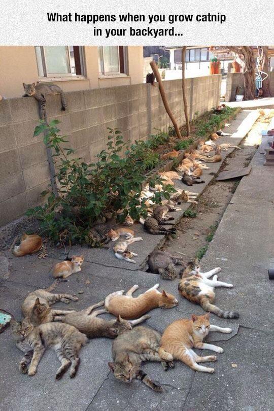 My sudden urge to take up gardening.