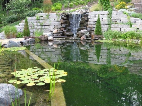 Naturpool Design Schwimmteich Mini Wasserfall Seerosen