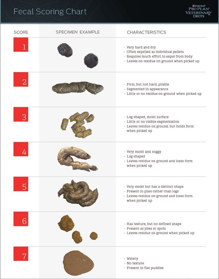 A Survival Guide for Dog Diarrhea Dog care, Doggies and Dog - stool color chart