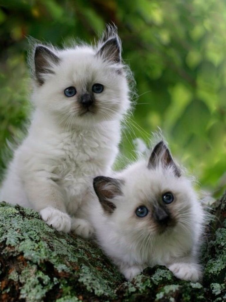 Pin by Bella Allen on Kitten (With images) Cute animals