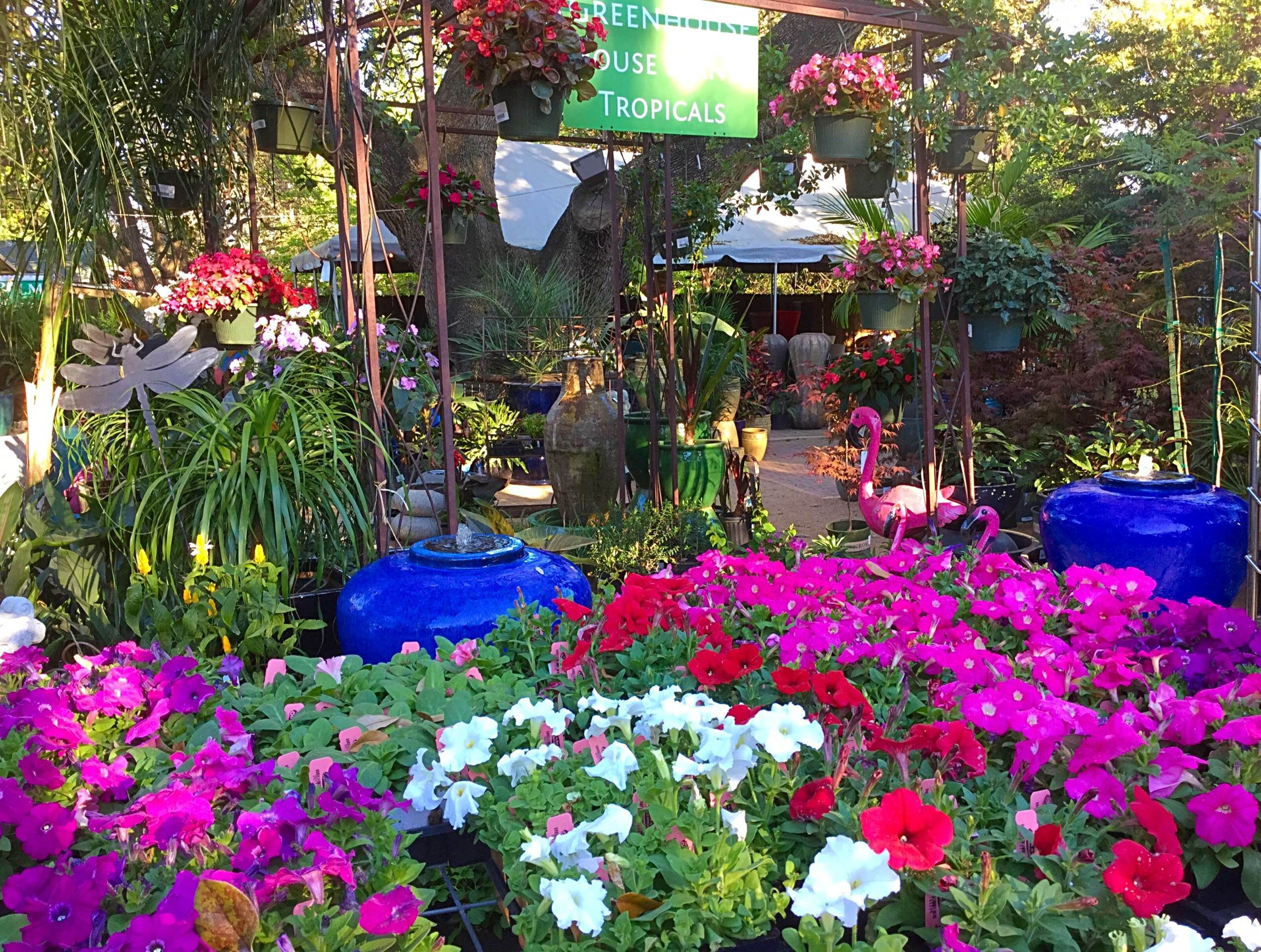 We Are In Full Bloom At The Great Outdoors Nursery Austin Texas