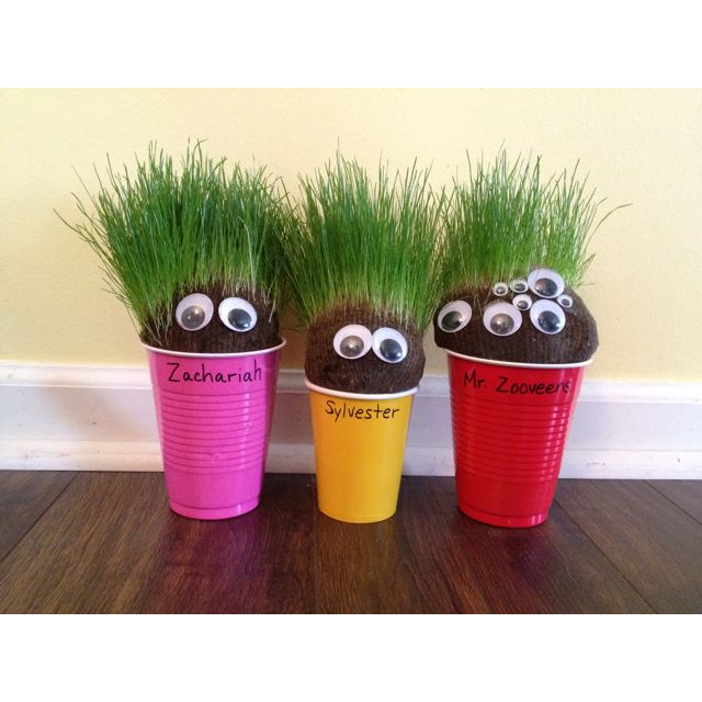 Pin By Paperandthepea On For The Kiddos Chia Pet Craft