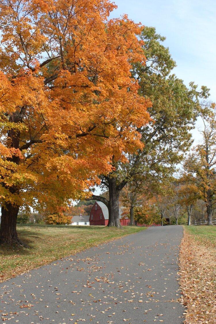 Fall in Connecticut's Farmington Valley — Kristy & New England