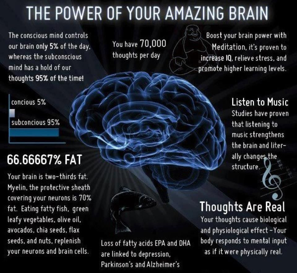Science Facts Brain: The Power Of Our Amazing Brain