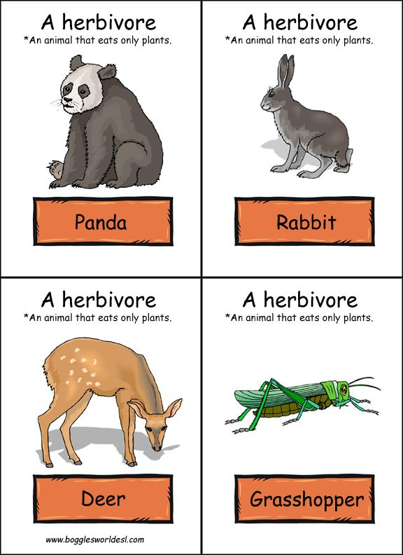 Quia - Life Science - Lesson 5: Unique Niche, Food Chains, and Food Webs - With PICTURES! (English & Spanish)