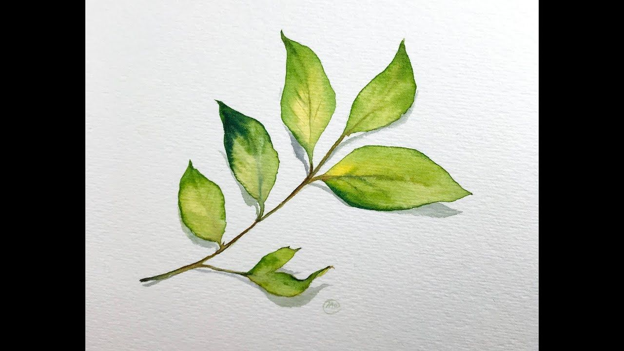 How To Paint A Simple Leaf In Watercolors Level 1 Easy Youtube