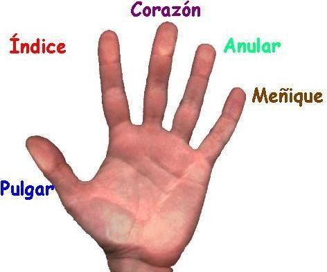 Nombres De Los Dedos De La Mano Ded Nombres De Los Dedos Aprender Español Dedos De La Mano