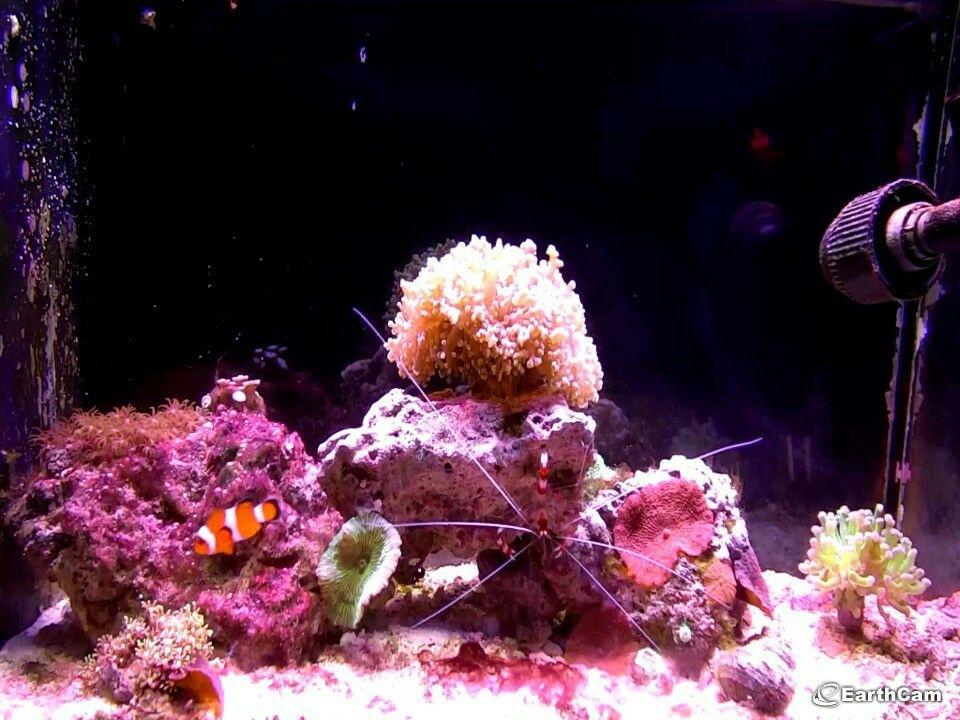 Saddle aquarium, NJ