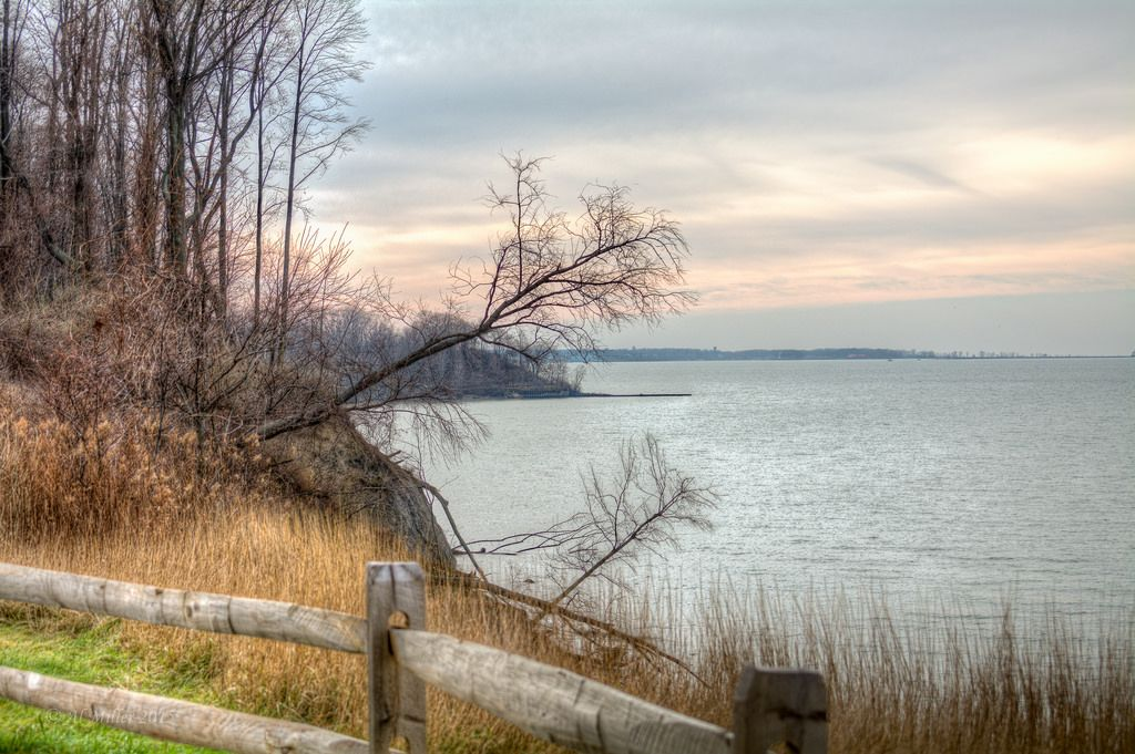 Lake Erie Bluffs - View from NW corner of Bluffs Loop Trail (fence)