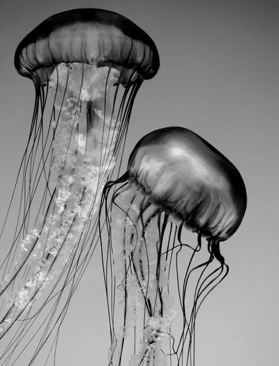 Items similar to Jellyfish Art, Black and White Nature Photography, Nature Wall Art, Wildlife Photography, Animal Art Print on Etsy