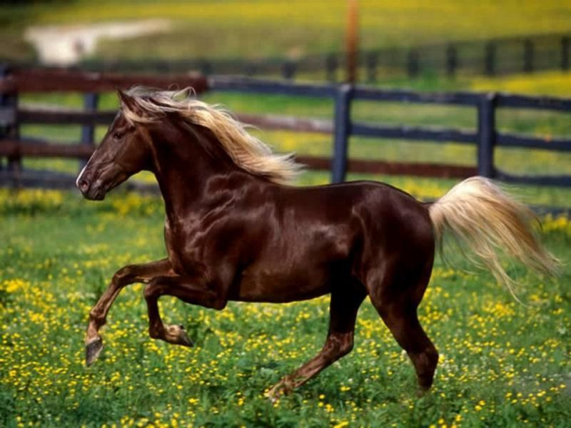 Liver Chestnut Horse With Flaxen Mane And Tail - photo#4
