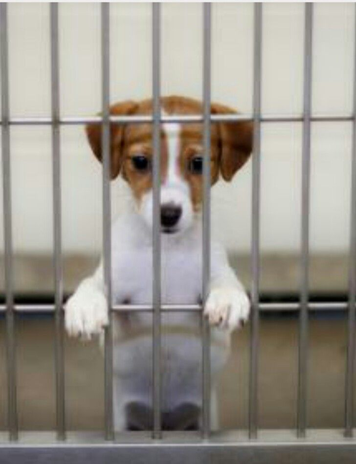 Save The Pups From The Pound And Adopt Your Own Today At Your Local Dog Pound Pet Store Rescue Dogs Pet Shop