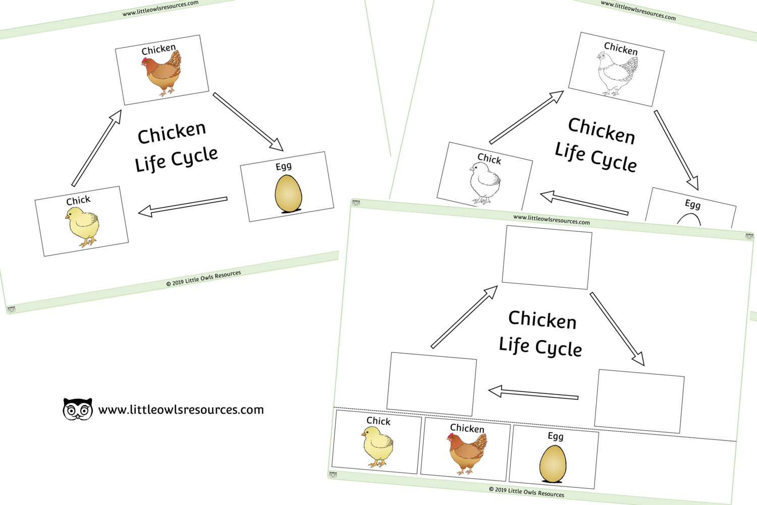 Free Chicken Life Cycle Printable Early Years Ey Eyfs