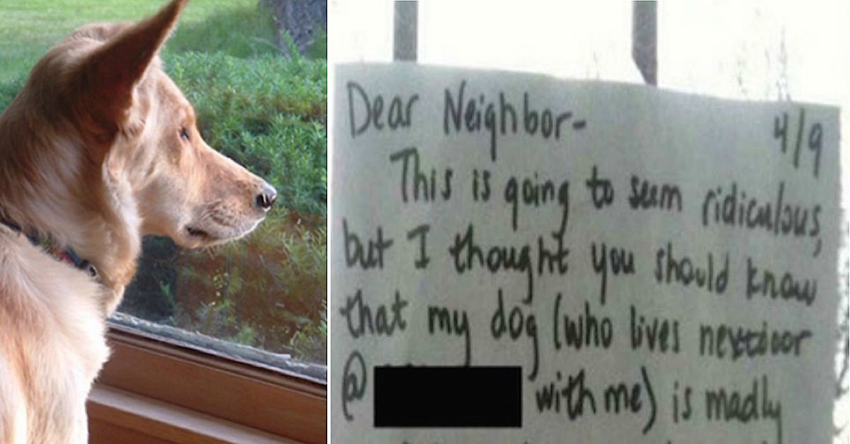 Dog Is Heartbroken So Owner Tapes A Note On Neighbor S Window