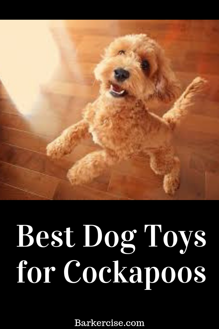 Best Toys For Cockapoos Cockapoo Puppies Best Dog Toys Dog Toys