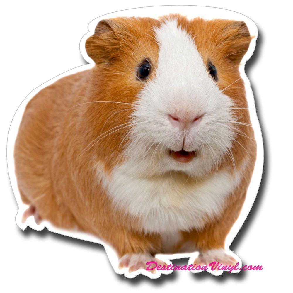 Pin On Piggie Spirit