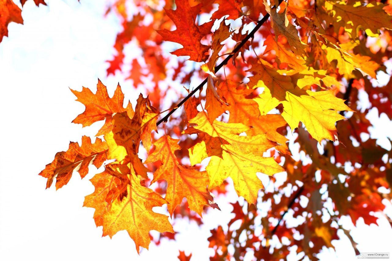 Открытки листья осень