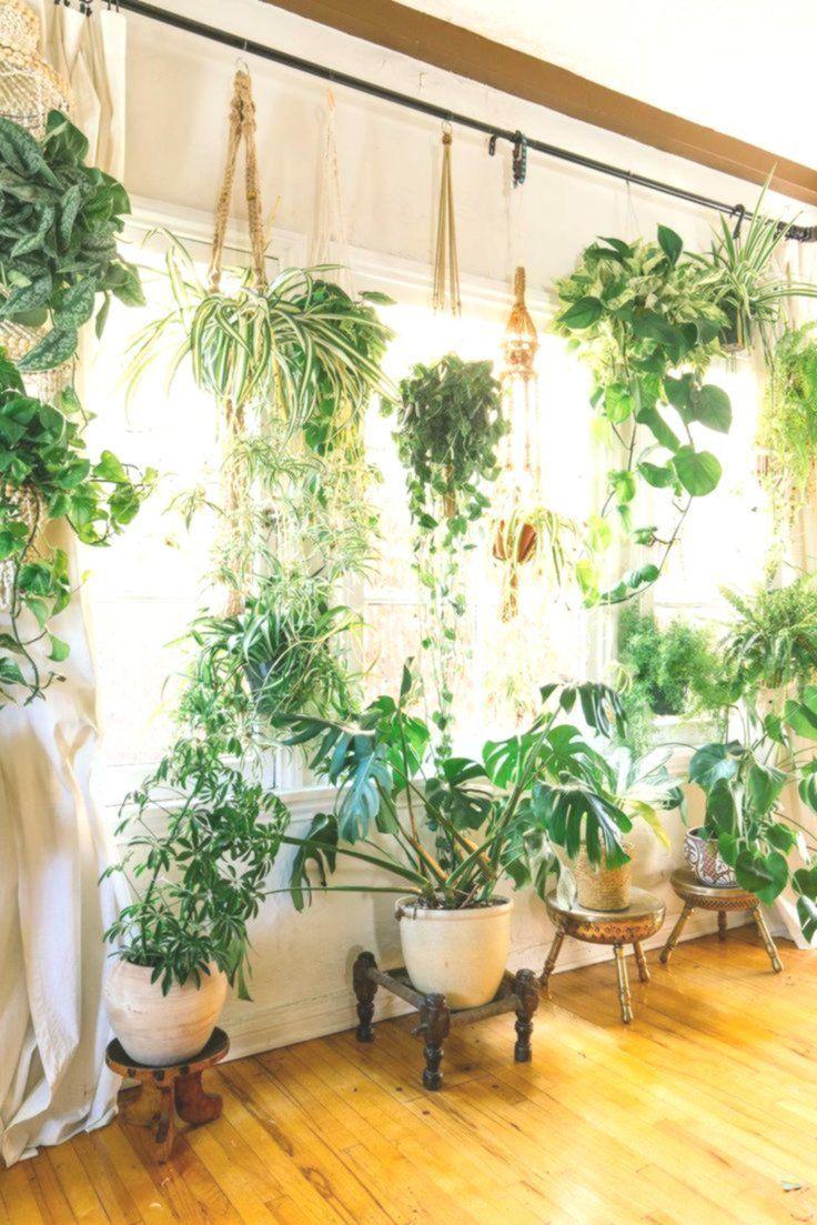 Wie Sie mit Zimmerpflanzen Leben in Ihr Zuhause bringen