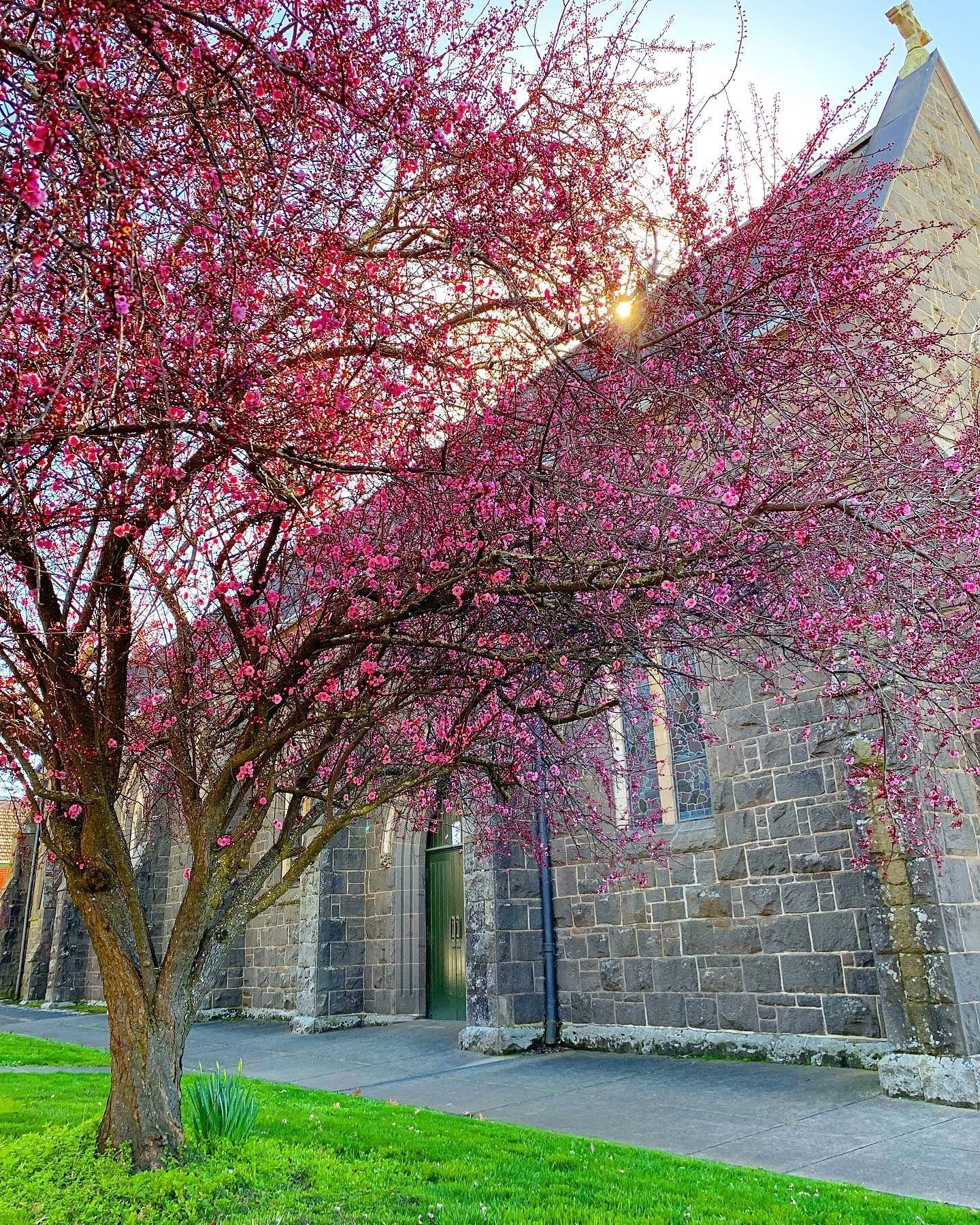 Live The Best Places To See Cherry Blossoms In Australia Pretty Trees Cherry Blossom Beautiful Blooms